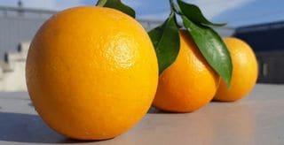 伊東温泉競輪を攻略する「オレンジプラン」とは